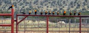 birdsonfence